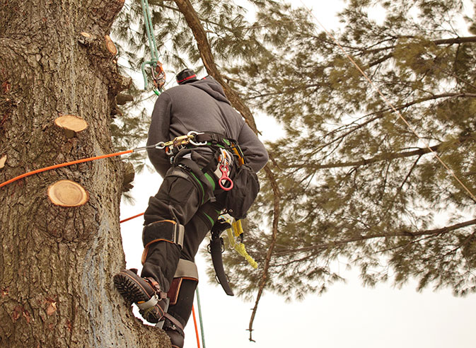Empire Tree Service employee trimming a tree