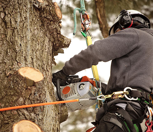 Empire Tree Service employee cutting a tree down