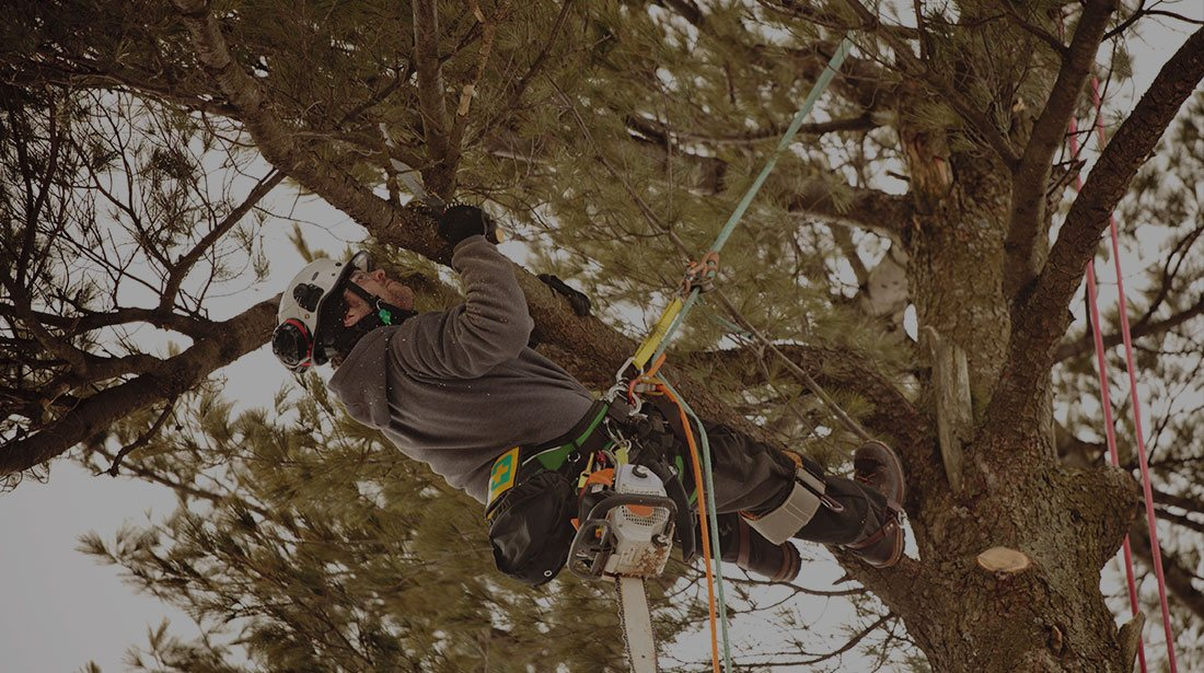 Empire Tree Service: Emergency tree removal in Ontario, Riverside and Arcadia