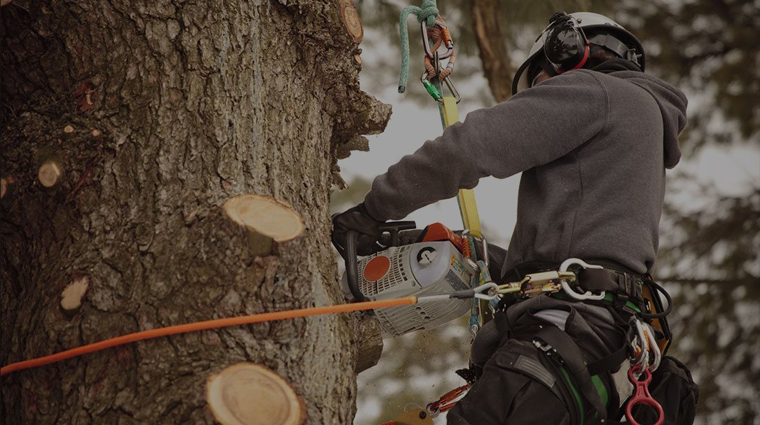 Empire Tree Service: Stump and tree removal in Ontario, Riverside and Arcadia