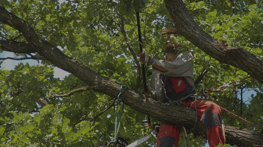 Empire Tree Service: Tree cabling and bracing in Ontario, Riverside and Arcadia