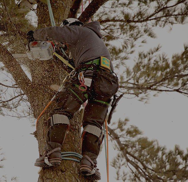 Empire Tree Service: Tree health in Ontario, Riverside and Arcadia