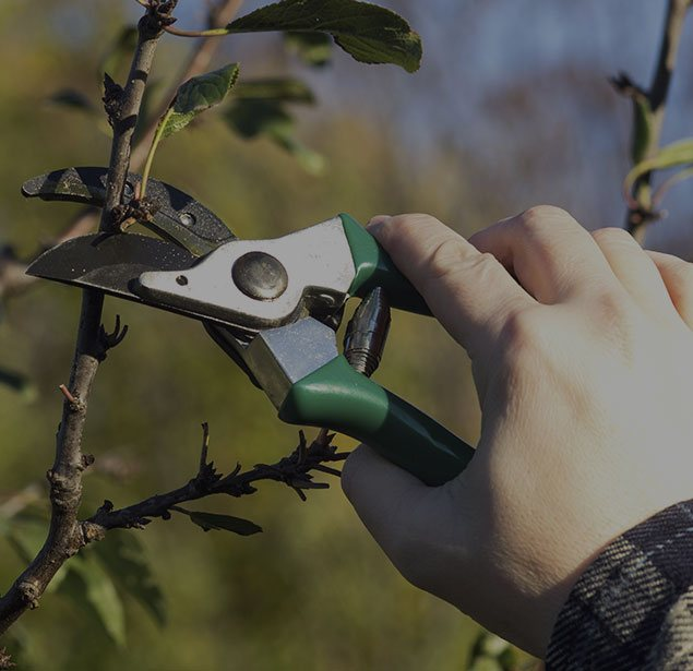 Empire Tree Service: Tree pruning in Ontario, Riverside and Arcadia
